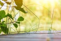 Gräs och stora leaves som lutar under strålar av sunen Royaltyfria Foton
