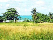 Gräs och strand Royaltyfria Foton