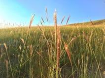 Gräs och sun Arkivfoto