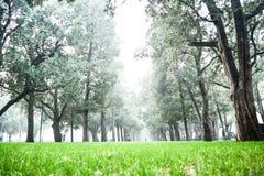 Gräs och träd Royaltyfri Foto