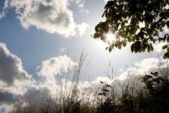 Gräs och träd på solskenet Arkivbilder