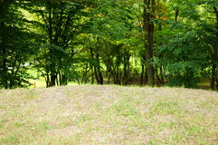 Gräs och trees arkivfoto