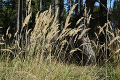 Gräs och trees fotografering för bildbyråer