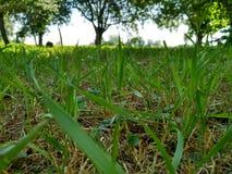 Gräs och trees Royaltyfri Foto