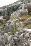 Gräs och växter Royaltyfria Bilder