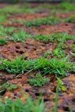 Gräs och vagga royaltyfri fotografi