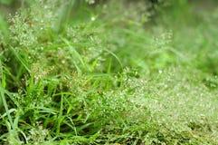 Gräs- och vattendroppbakgrund royaltyfri bild
