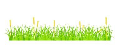 Gräs och vete Royaltyfria Foton