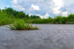 Gräs på asfalt arkivbild