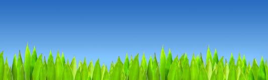 Gräs på bakgrund för blå sky Arkivbild