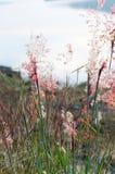 Gräs på berget under solnedgång Royaltyfri Foto