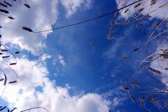 Gräs på blå bakgrund Arkivfoto