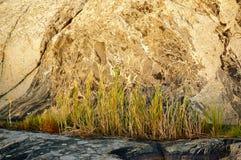 Gräs på den äldsta berggrunden i Norge Fotografering för Bildbyråer