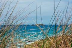 Gräs på den Gwithian stranden Cornwall royaltyfri foto