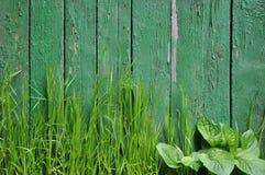 Gräs på en bakgrund av ett gammalt staket Arkivfoto