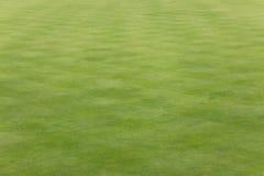 Gräs på en bowlsplan Royaltyfri Foto