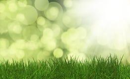 Gräs på en defocussed grön bakgrund Royaltyfria Bilder