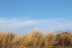 Gräs på en dyn framme av blå himmel Royaltyfri Bild