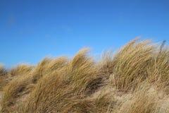 Gräs på en dyn på stranden Royaltyfri Bild