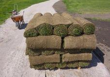 Gräs på en palett Arkivbild