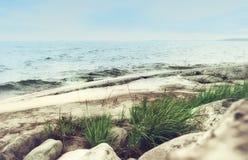 Gräs på en Rocky Seashore Arkivfoto