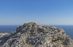 Gräs på en stenig klippa på bakgrunden av havet crimea arkivbild