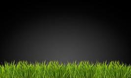 Gräs på en svart bakgrund Royaltyfri Foto