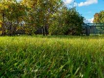 Gräs på ett gräsmattaslut upp i sommaren i soligt Arkivfoto