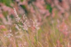 Gräs på fältet Arkivbild