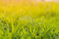Gräs på fältet under soluppgång som är passande för att skriva ord eller bak platserna arkivbilder