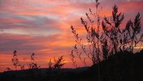 Gräs på The Field på ljus gryning arkivfilmer