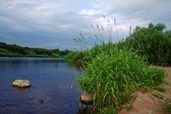 Gräs på flodbanken Fotografering för Bildbyråer