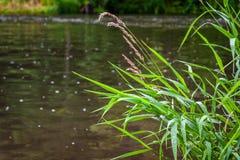 Gräs på flodbanken Arkivfoto