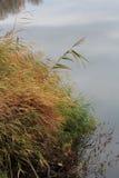 Gräs på flodstrand Arkivbilder