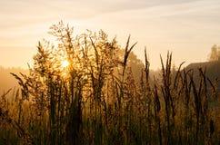 Gräs på gryning Arkivbild