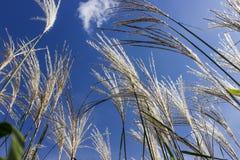 Gräs på himmelbakgrunden Royaltyfria Foton