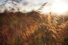 Gräs på ljuset Arkivbilder
