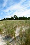 Gräs på sanddyn på stranden i Lubiatowo, Polen Arkivbilder