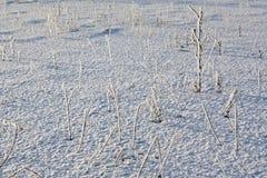 Gräs på snön Fotografering för Bildbyråer