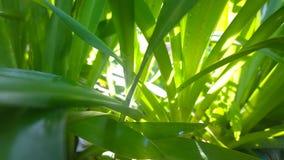 Gräs på solljus Royaltyfri Bild