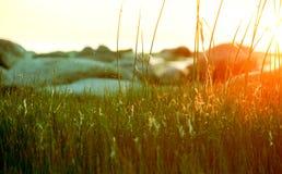 Gräs på solnedgången Fotografering för Bildbyråer
