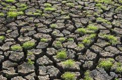 Gräs på sprucken jord royaltyfri fotografi