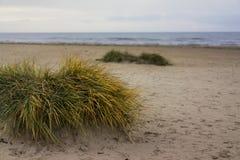 Gräs på stranden Arkivfoto
