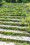 Gräs på trappa Arkivbilder
