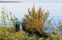 Gräs på vattenbakgrund Royaltyfri Foto