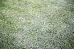 Gräs parkerar in Arkivfoton