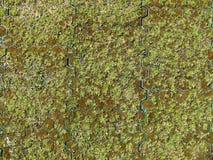 Gräs pavers med mossa och det gamla gräsfotoet royaltyfria bilder