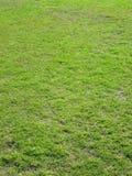 gräs pitchtextur Royaltyfria Foton