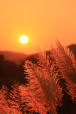 gräs putsar solnedgång Royaltyfri Bild
