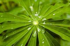 gräs raindrops royaltyfria bilder